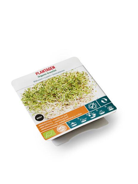 Dyrkesett Alfalfa bio