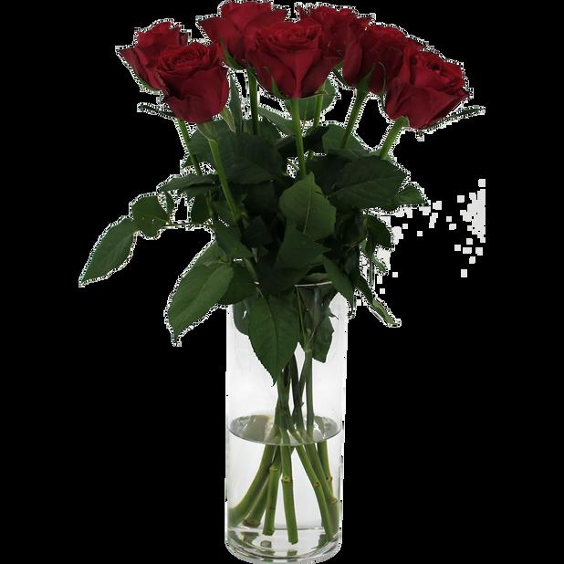 Roser 'Romantic Red', Høyde 50 cm, Rød