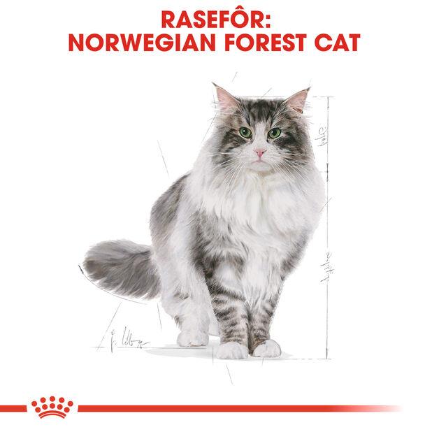 Norwegian Forest Cat  2kg, 2 kg, Flerfarget