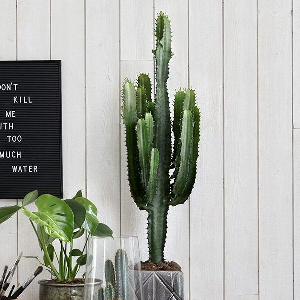 Kaktus som gave