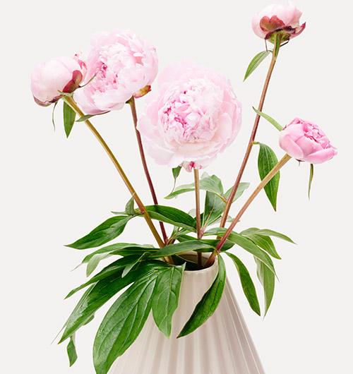 Peoner i vase