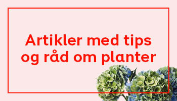 Tips og råd om planter